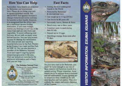Bahamas Iguana Brochure